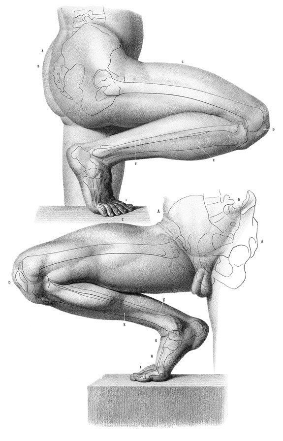 Anatomy 4 sculptors | The leg and foot ★ Find more at http://www.pinterest.com/competing/: