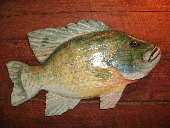 Blue gill inch chainsaw wood ocean arts carvings