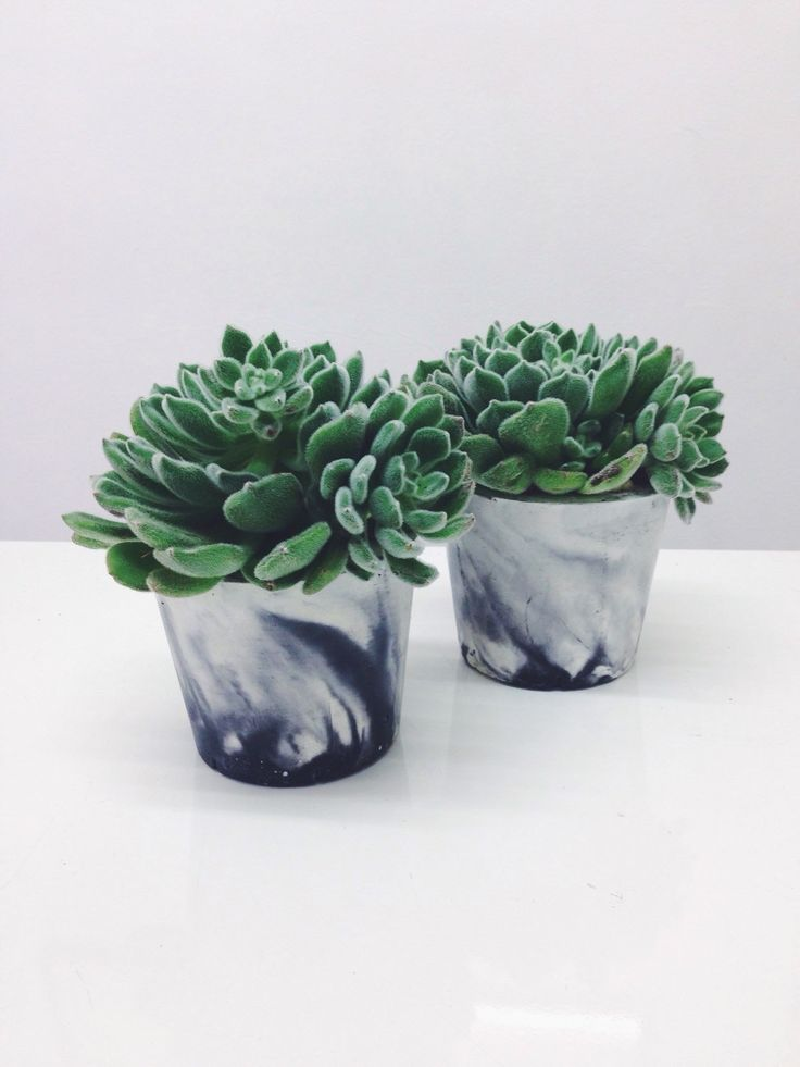 Medium sized marbled cement pots / planters for plants cactuses succulents in white and black marble porcelain concrete