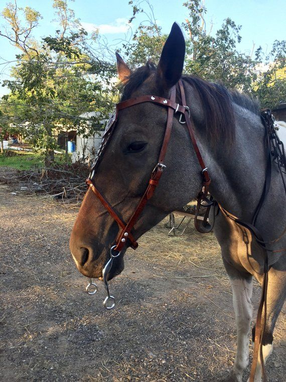 Hackamore Bitless CHEVAL BIT anglais western