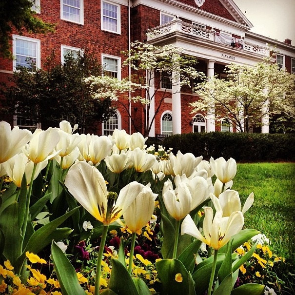 Elon University is consistently voted as the one of the most beautiful campuses in the United States not to mention one helping to shape the state leaders of tomorrow. #NorthCarolina #highereducation