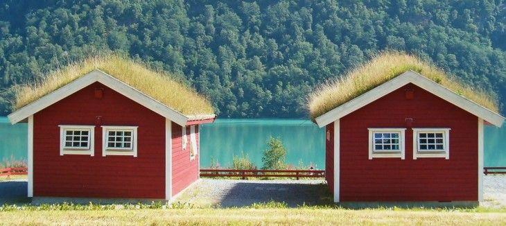 Il tetto verde e il verde verticale