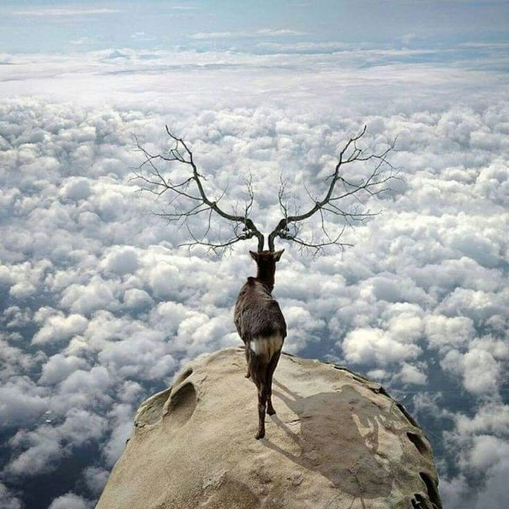 """Shadow Effect: """"Upon The Rock ~ Above The Clouds."""""""