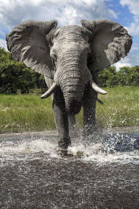 Foto   – Elephants