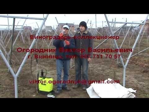 Как укрывать виноград на зиму.