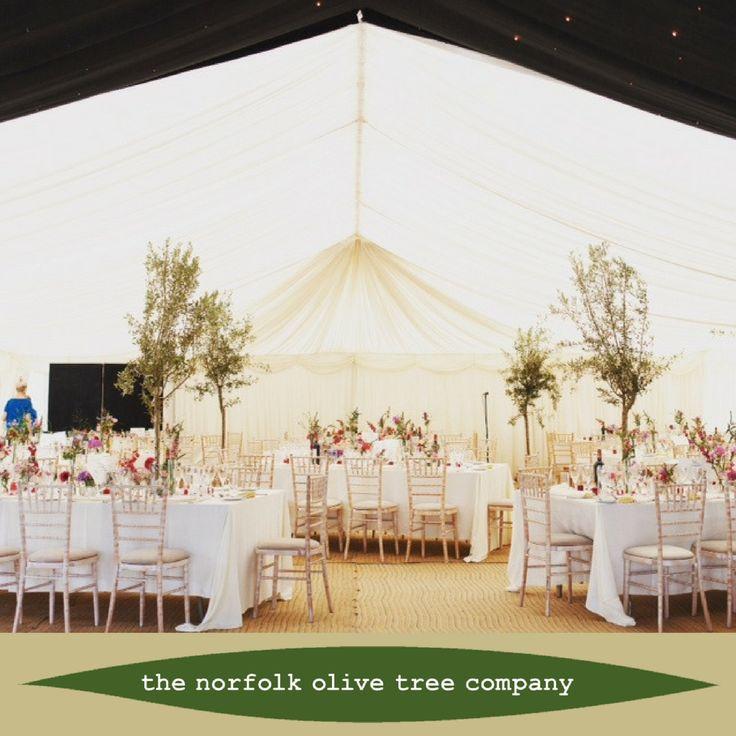 Norfolk Olive Tree Company