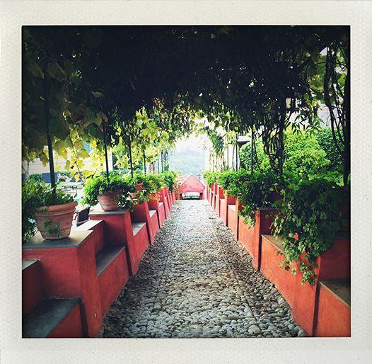 Villa Rosmarino, Camogli, Liguria (I huvudet på Elvaelva)