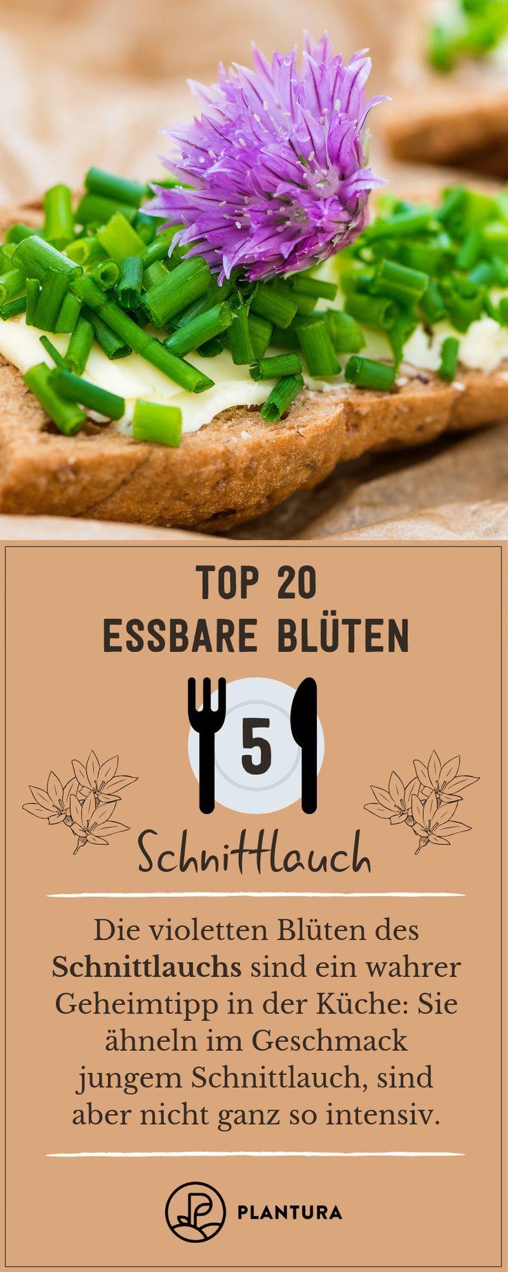 Essbare Blüten: Unsere Top 20 für Ihren Teller