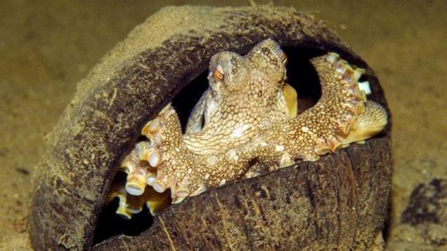 The growing evidence for octopus intelligence