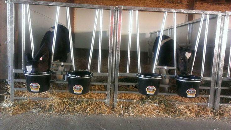 Galvanized Calf Pens w/ Bucket Holders Mid Valley