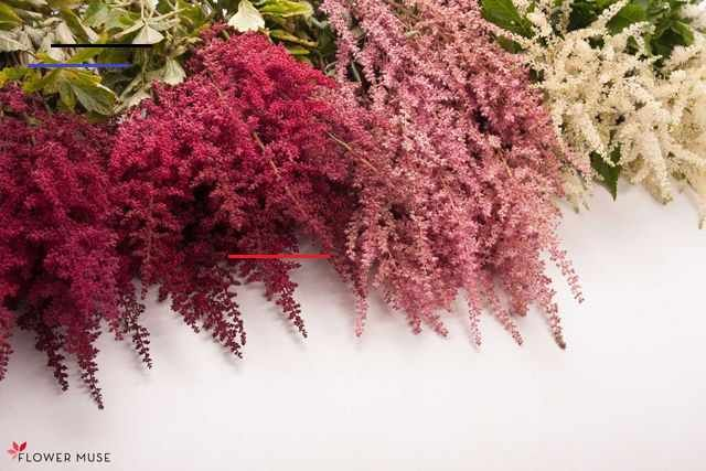 Wtf What S That Flower Astilbe Flower Muse Blog Astilbebouquet In This Wtf What S That Flower Blog Serie In 2020 Astilbe Bouquet Astilbe Flower Astilbe