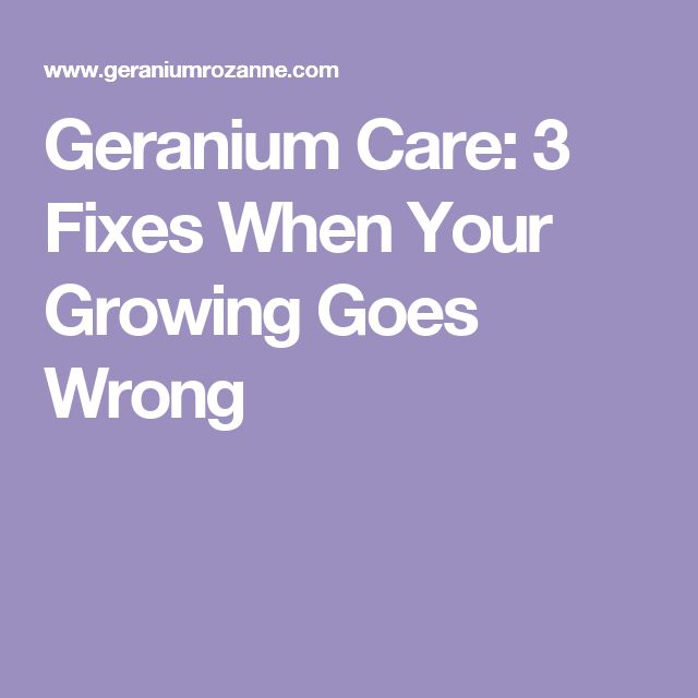 Geranium Care: 3 Fixes When Your Growing Goes Wrong
