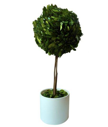 Boxwood Topiary $58