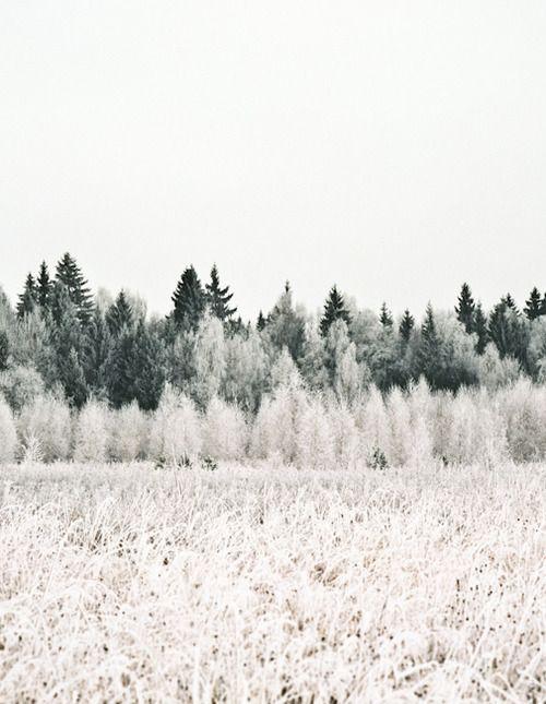 Winter Frost   #DestinationScandinavia #ClubMonaco