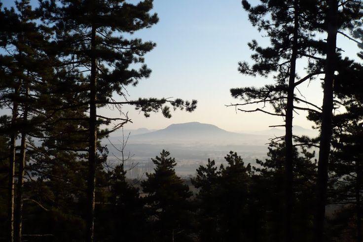 Szt. György-hegy a nemesvitai Kísérleti-erdőből