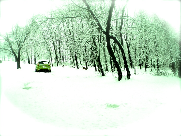 snow fiesta