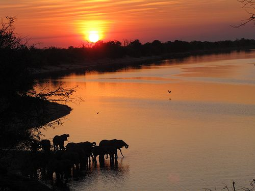 Sunset with elephant in Botswana