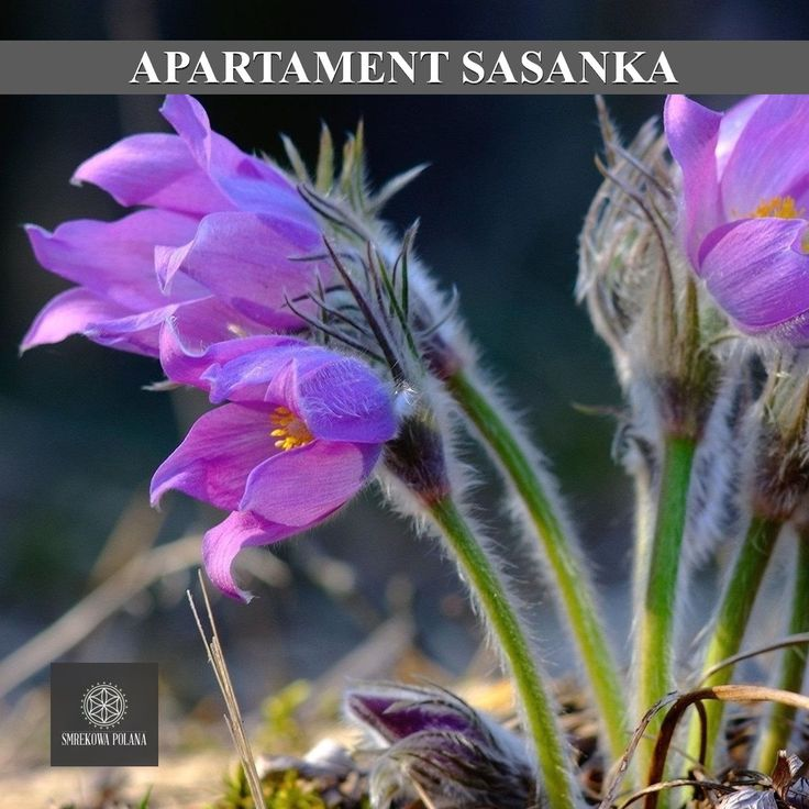 Apartament Sasanka - zapraszamy! #poland #polska #malopolska #zakopane #mountain #tatry #place #destination