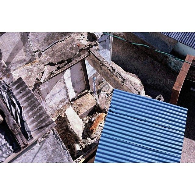 vutylife / #nikon #f3hp #nikkor50mm #35mm #slide #film #필름 #analog #filmphotography #filmphotograph #travel #alone #busan #나홀로 #부산 #여행 #감천문화마을 #고양이 #cat #provia100f / 부산 사하 감천 / #골목 #폐허 #지붕 / 2014 01 03 /