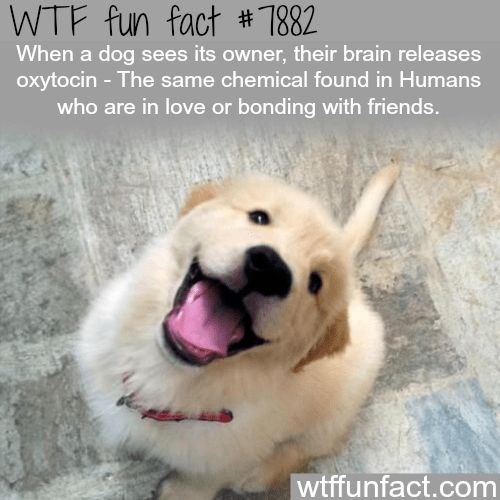 3671 Best WTF Fun Facts Images On Pinterest