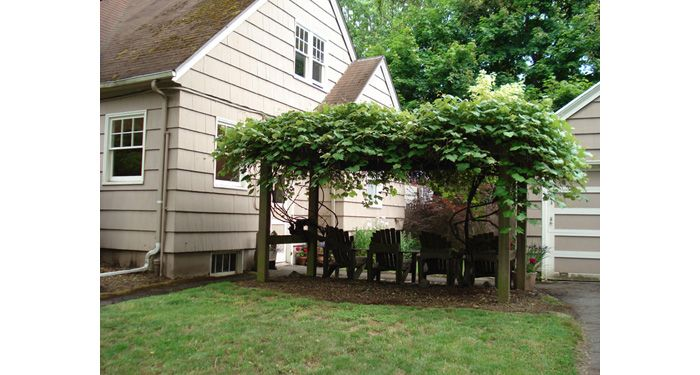 A grapevine arbor in a residential yard provides shade as well as an edible product for the homeowners.