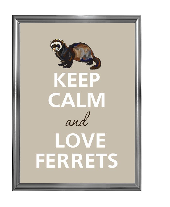 Keep+calm+and+love+ferrets+by+Agadart+on+Etsy,+$12.00
