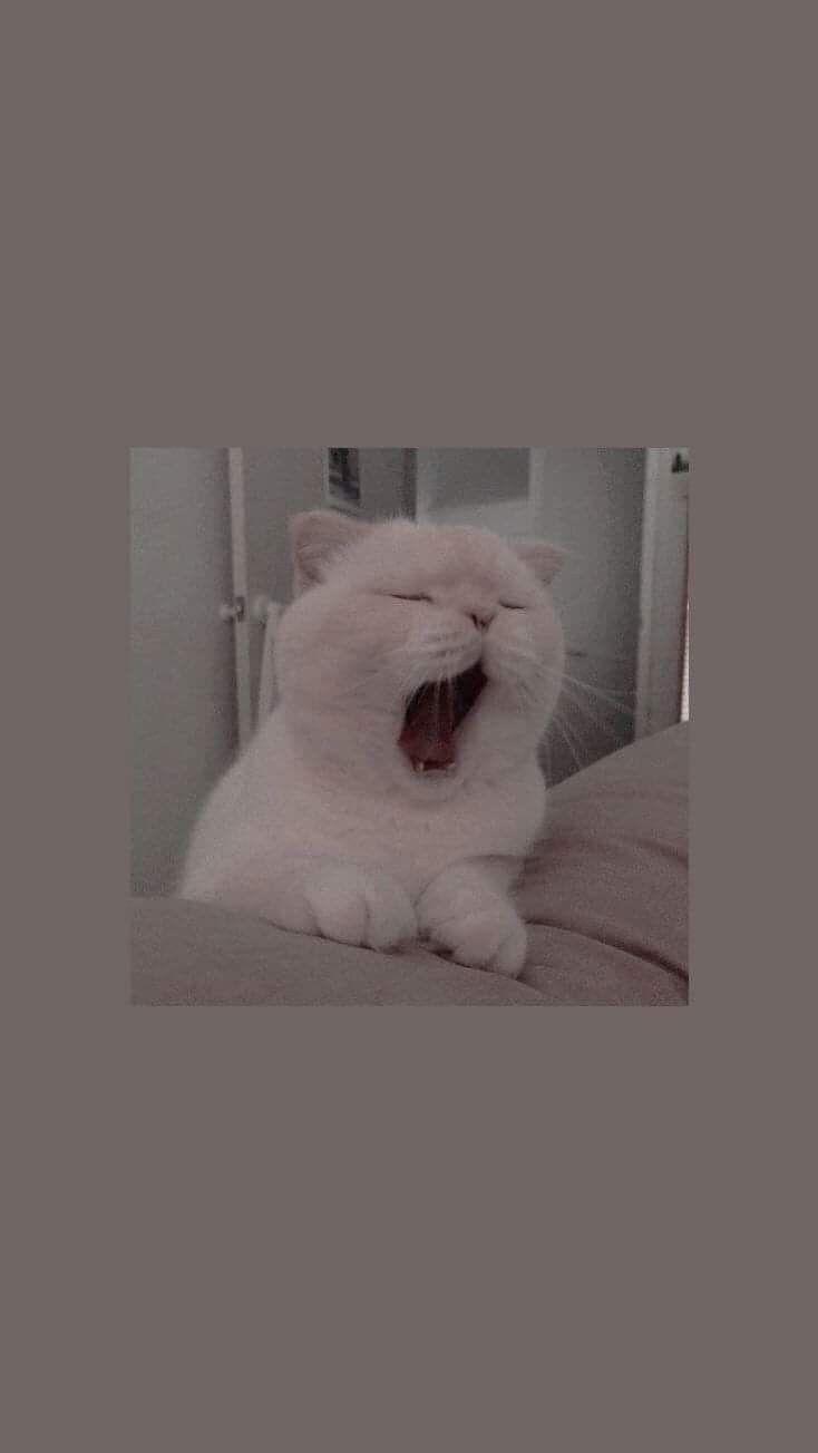 Pin By Victoria On À¸à¸²à¸žà¸›à¸£à¸°à¸à¸à¸š In 2020 Cat Wallpaper Locked Wallpaper Android Wallpaper