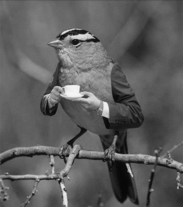 Bird man enjoys a spot of tea~♛