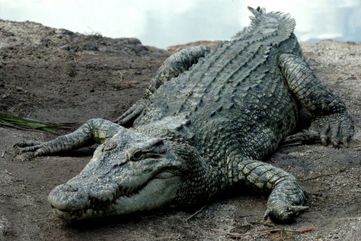 Teluk Sengat Crocodile Farm, Kota Tinggi, Johor – West Malaysia's Largest…