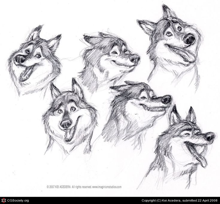 how to draw cartoon dogs puppies and wolves