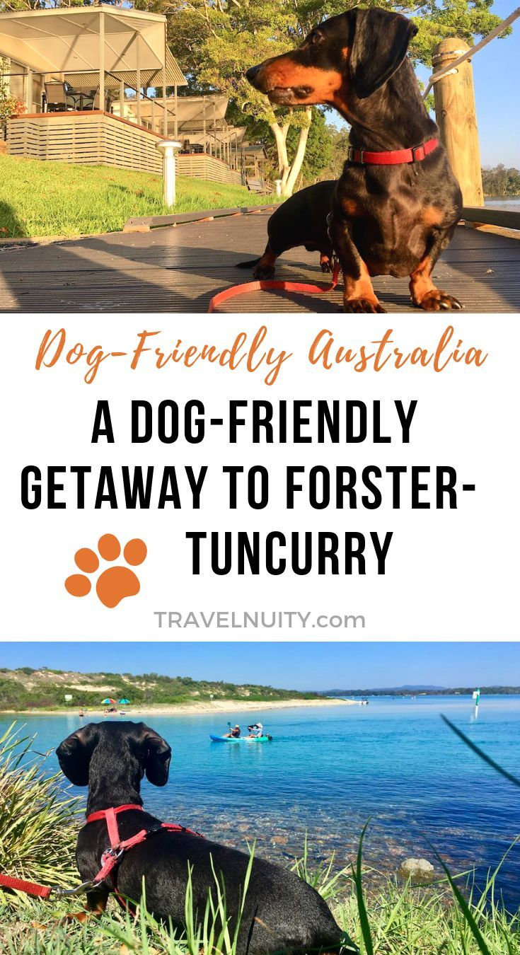 Dog Friendly Getaway To Forster Tuncurry Dog Friends Pet Travel Dog Travel