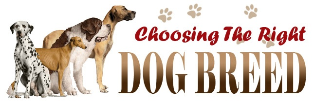 Choosing a Dog - Things Everyone Should Look For