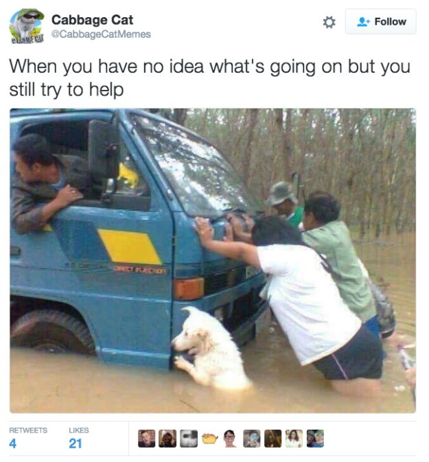 On cooperation: | 21 Pure, Wholesome Tweets That Will Help You Through The Dark Winter