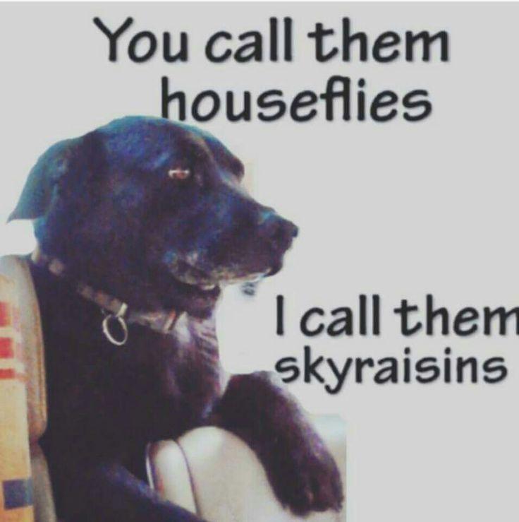 I will also now call them sky raisins.