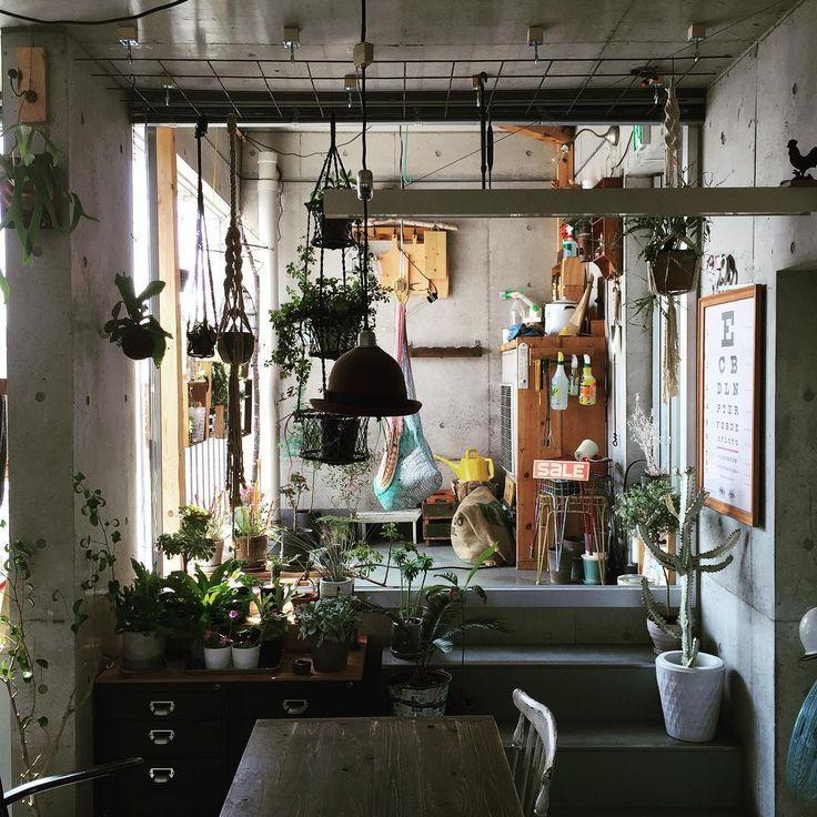 昨日買ったワイヤーメッシュを朝から天井に取り付け! 以前は棒だったけど今回はワイヤーメッシュ! これで以前よりもいっぱい植物かけられる(^ν^) #ワイヤーメッシュ#観葉植物#多肉植物#インテリア