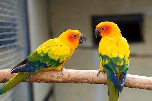 www.petclic.es la mayor tienda online de productos para #mascotas. La mayor biblioteca de contenido y consejos sobre mascotas. 1.000 consejos. 50.000 imágenes. Foto del #aves #pajaros #animal #periquitos