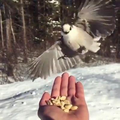 So Lovely Birds……