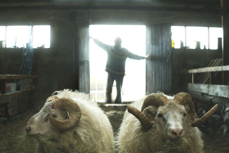 Gold Boat recommends: Rams, a drama about two feuding, sheep-farmer brothers in a remote area of Iceland. View on IcelandAir