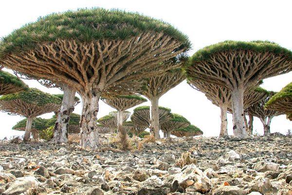 ソコトラ島(Socotra Island)や世界各地の旅行・観光の絶景画像|アイディア・マガジン「wondertrip」