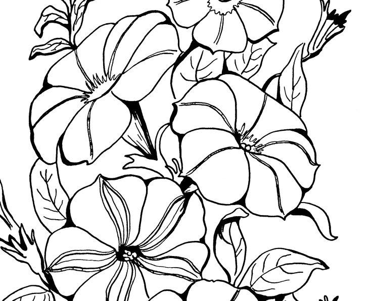 205 Best Images About Line Art On Pinterest Dovers