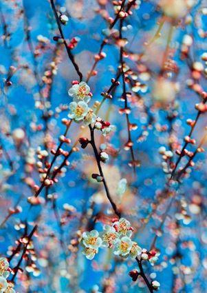#Fleurs photo Mika Ninagawa