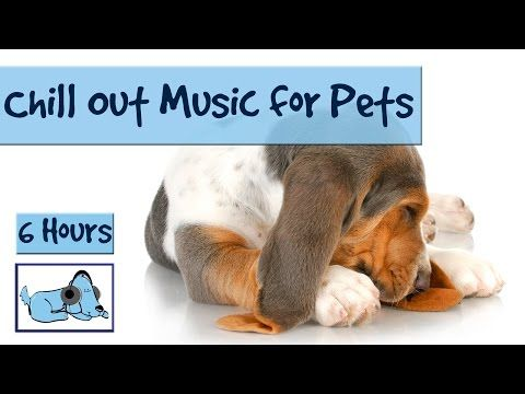 """5 Hours of """"Anxiety Prevention"""" Music for Dogs and Pets. Fireworks and Storms - Problem Solved! - YouTube"""