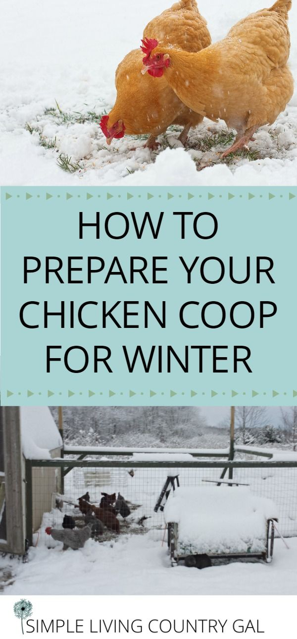 Prepare your chicken coop for winter by following these few easy steps. Safe, clean and healthy hens produce the best eggs.    Chickens | Coop | Winter prep | coop for winter via @SLcountrygal