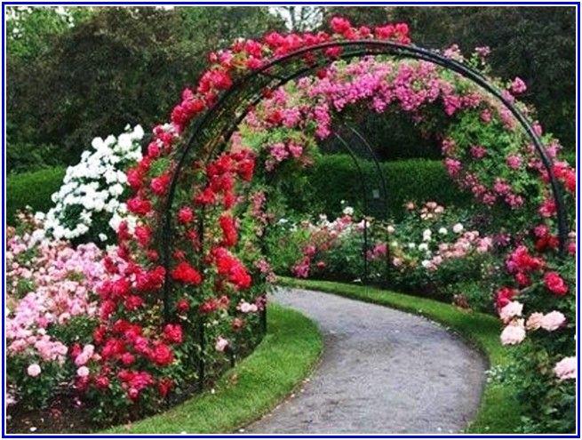 cool Rose Garden Landscaping