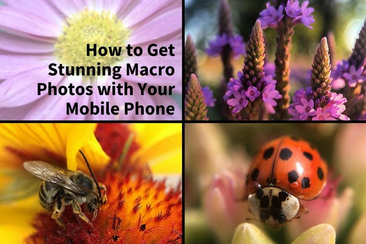 You don't need a lot of expensive gear to do macro photography. In fact follow these tips to get stunning macro shots using your phone!