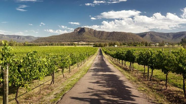 Australian wine exports grow with demand from China