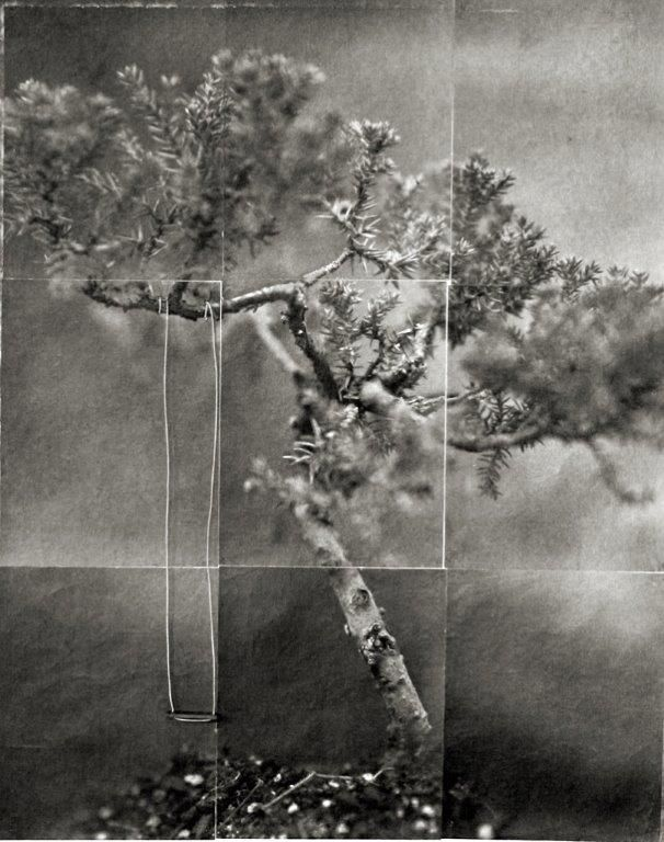 Bonsai (Juniper)<br />