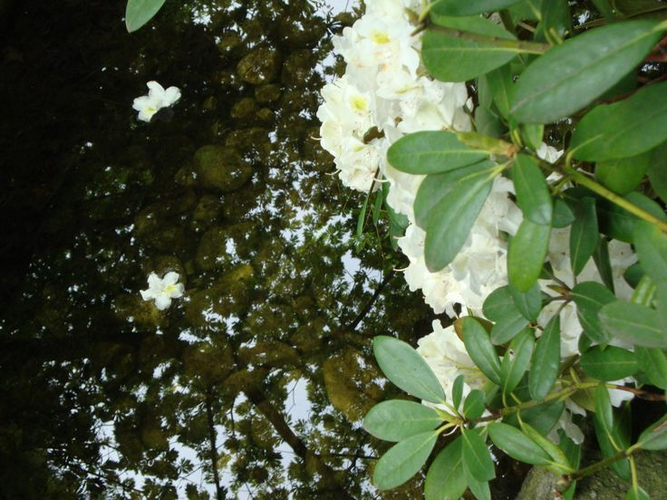 One day I'll fly away  #nature #flower #water #white #green #fly
