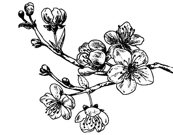 sakura flower embossing - Google Search