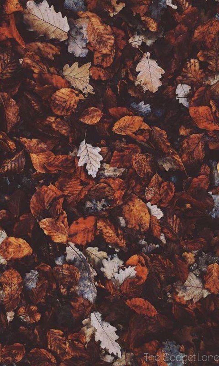 Apple 秋 壁紙 アボリジニのアート 秋 デザイン イラスト